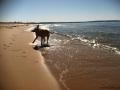 Spring Dip At North Bar Beach