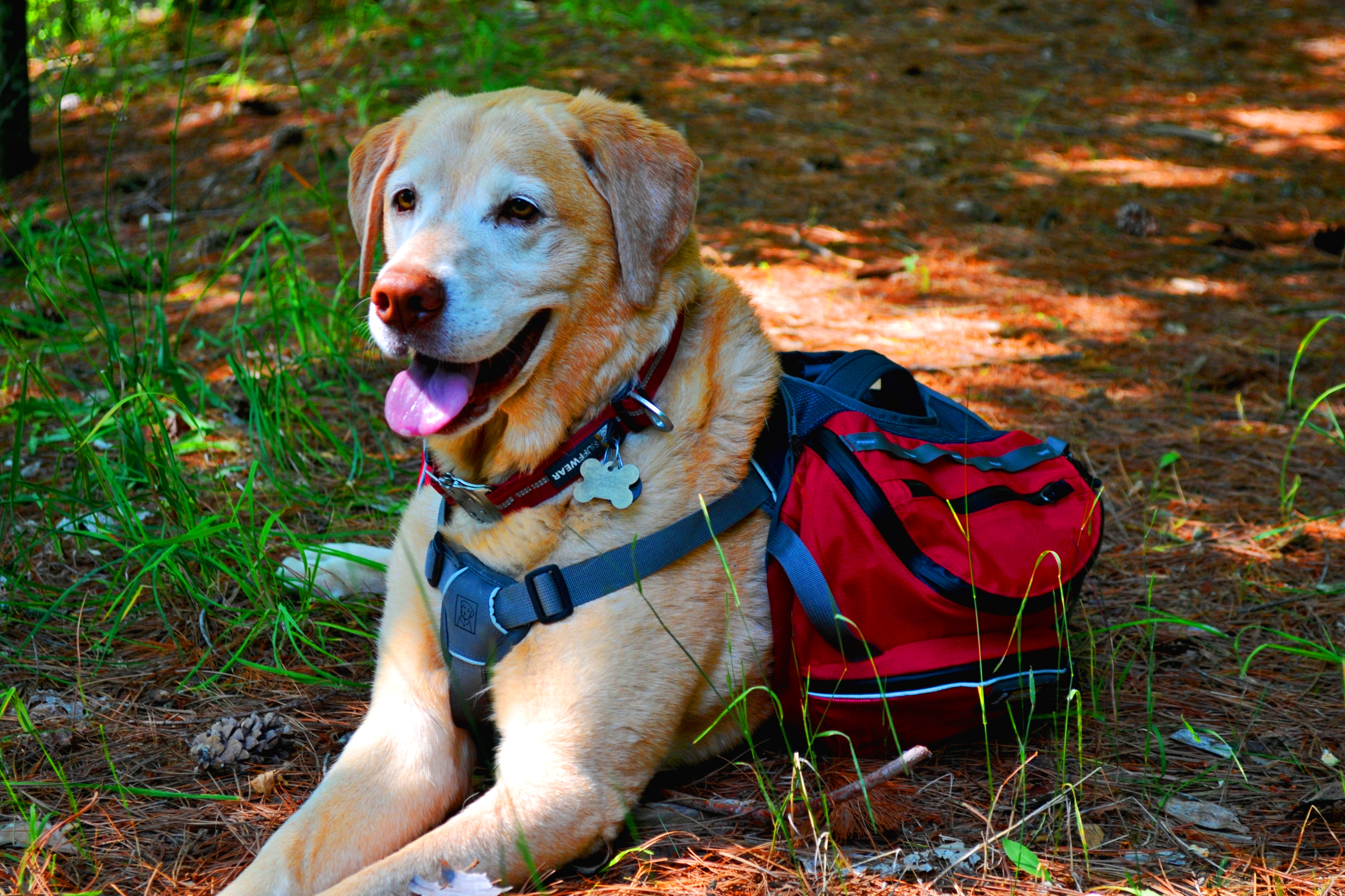 the dog days of summer tips for keeping your outdoors k9 cool