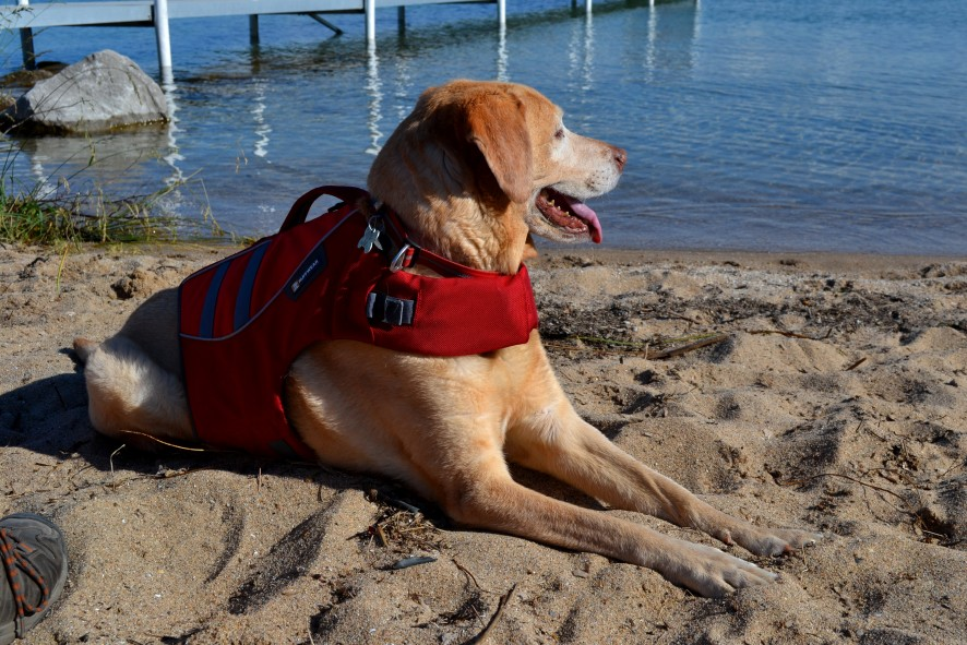 The Dog Days of Summer. Tips for keeping your Outdoors K9 cool.