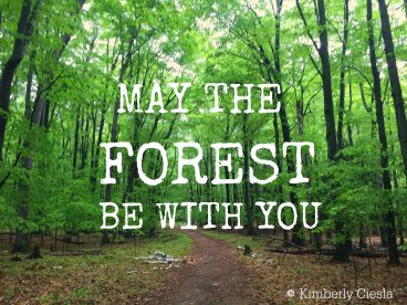 Quote: May the forest be with you